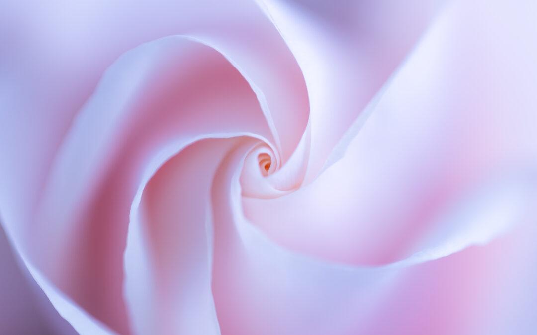 Creatività con una rosa